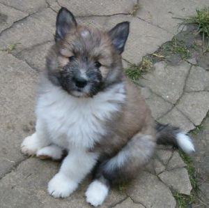 feline02