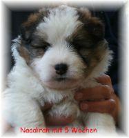 naadirah02
