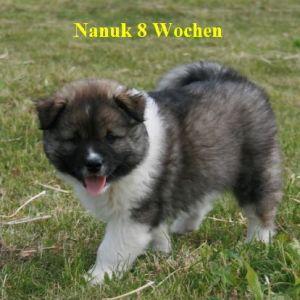 nanuk02