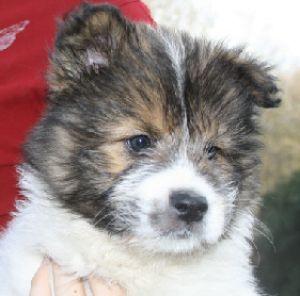 puppie03